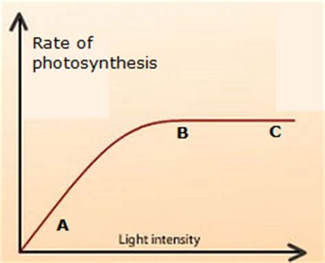How Does Light Intensity Affect Photosynthesis by 44 Limiting Factors In Photosynthesis Biology Notes For
