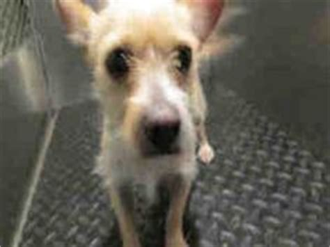 bakersfield shelter puppies and dogs