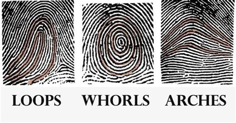 pattern types of fingerprints what is the mystery behind our unique fingerprints