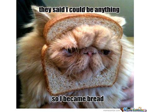 Cat In Bread Meme - he became bread by wim meme center