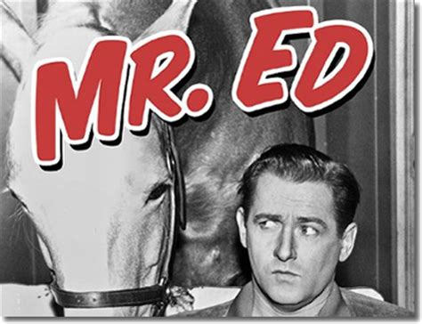 theme song mr ed reviews