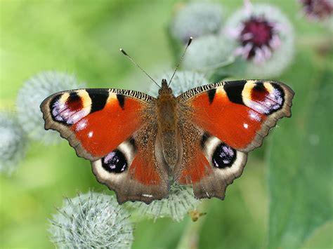 giardino farfalle il giardino delle farfalle farfalle assisi giardino