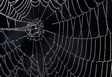 net like how spider webs achieve their strength mit news