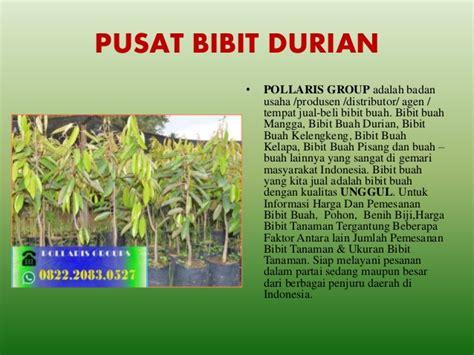 Bibit Durian Musang King Di Malang jual bibit durian di malang jual bibit durian bawor jual