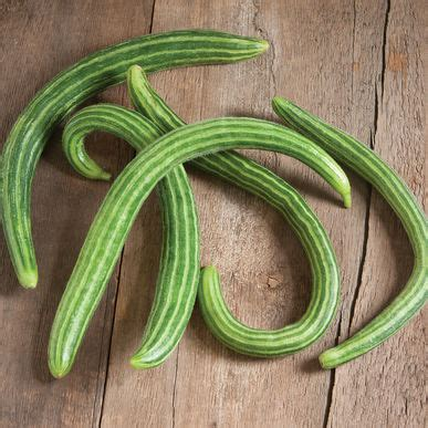cucumber seeds striped armenian cucumber seed johnny s selected seeds