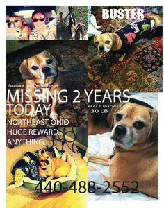 pug breeders in northeast ohio 1000 images about lost dogs oh on ohio lost and beagle mix