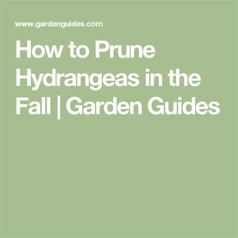 1000 ideas about pruning hydrangeas on pinterest hydrangeas hydrangea care and caring for
