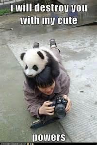 Cute Panda Memes - 10 april 2012 what about god