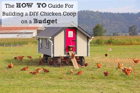 how to build own house how to build a diy chicken coop on a budget