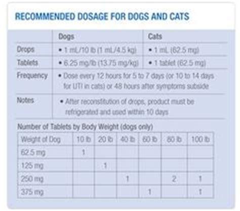 metacam dosage for dogs metacam for cats dose related keywords metacam for cats dose keywords