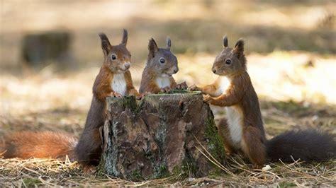 diy squirrel feeders ideas homemade youtube