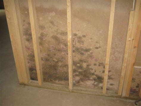 removing mold from bathroom walls how to remove mold from walls vizimac