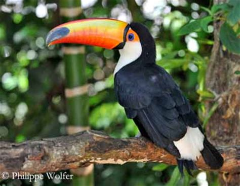 Toucan L by Toco Toucan
