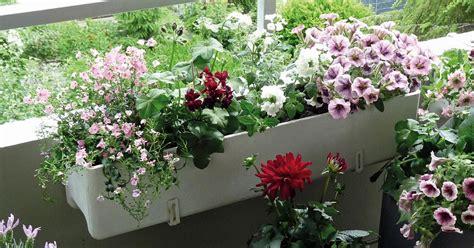 garten 50er balkonblumen richtig einpflanzen mein sch 246 ner garten