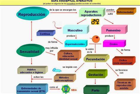 Cuadro Sinoptico Aparato Reproductor Femenino | cuadros comparativos entre sistema reproductor femenino y