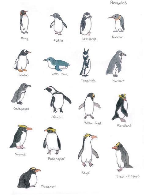 Penguin Species by Bibliobibuli01 on DeviantArt