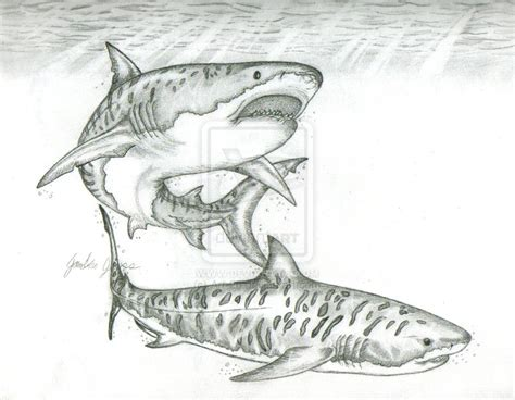 how to draw a doodle shark tiger sharks by 26 on deviantart