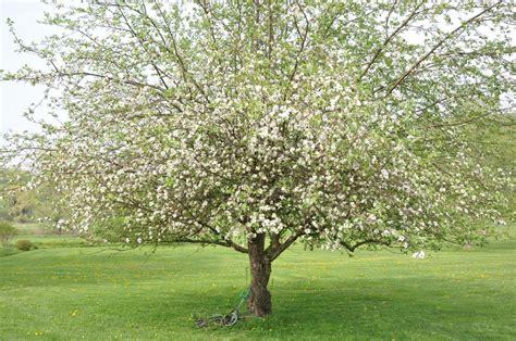 tree pollen gallery