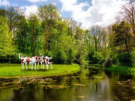 imagenes de paisajes y caballos fondo pantalla caballos en bosque