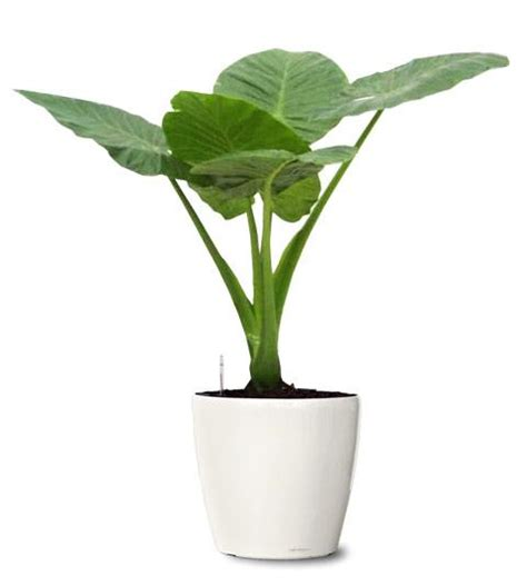 small plant ornamental plant small plant small exotic plant giant