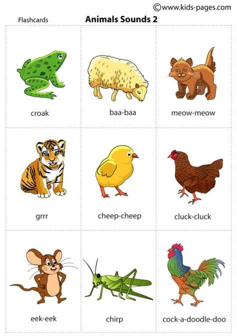 images  les animaux  pinterest