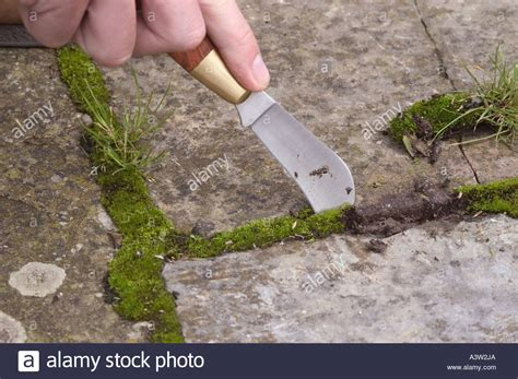 How To Remove Weeds Between Patio Stones by Gardener Taking Out Weeds From Between Paving Slabs Using