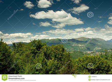 view of forest habitat royalty free stock photograph in view on green forest royalty free stock photo image