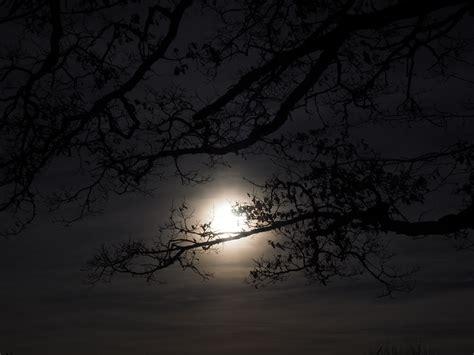fotos gratis arbol rama ligero nube en blanco