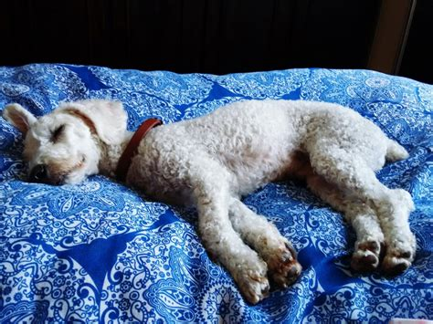dog sleeping on bed 26 things you ll only know if you let your dog sleep on
