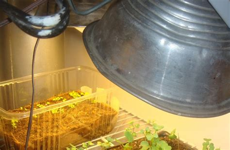 green roof growers seed starting update