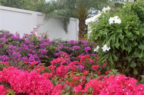 flowers for backyard villa in anguilla mcclelland miscellanea