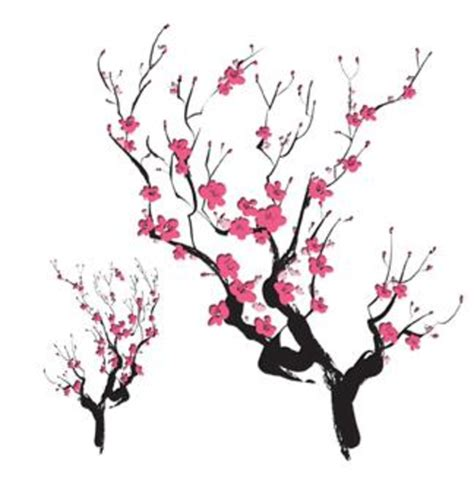 cherry blossom clipart japanese drawing pencil and in