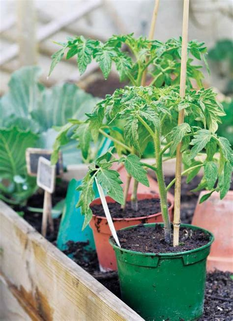 winter sowing your seedlings farm and garden grit magazine