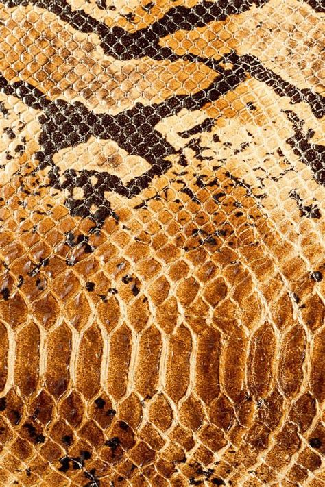 leopard print texture pattern by happycer4027 55 best animal print texture images on pinterest