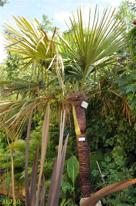 palmenarten mit bildern zimmer palmenarten mit bildern