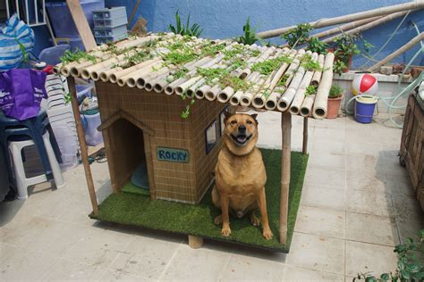 new dog in house rocky is the coolest dog in the neighborhood with his tropical new diy dog house