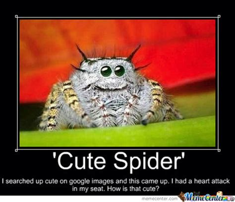 Cute Spider Memes - cute spider by amylovespenguins on deviantart