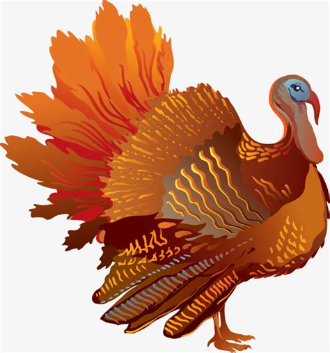 Klip Turky thanksgiving turkey turkey clipart turkey png