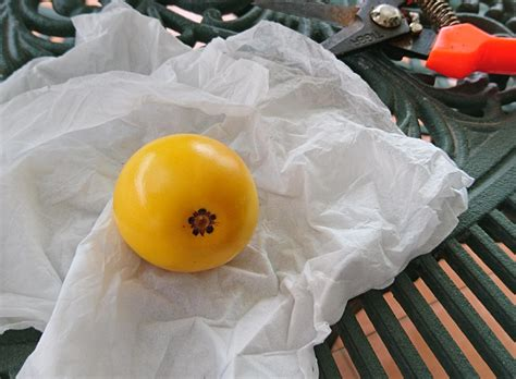 fruit similar to tropical plant identification similar to zz plant