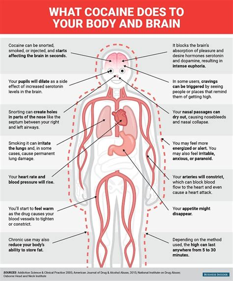 How Do You Detox From Cocaine by Infographic What Cocaine Does To Your And Brain