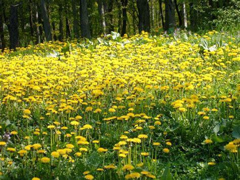 fiori medicinali salute naturale con le piante medicinali