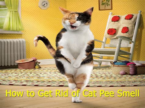 cat peeing in house tips how to get rid of cat pee smell youtube