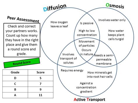 diffusion and osmosis venn diagram venn diagram diffusion and osmosis choice image how to