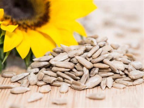 selecta alimenti semi di girasole propriet 224 benefiche dimagranti e