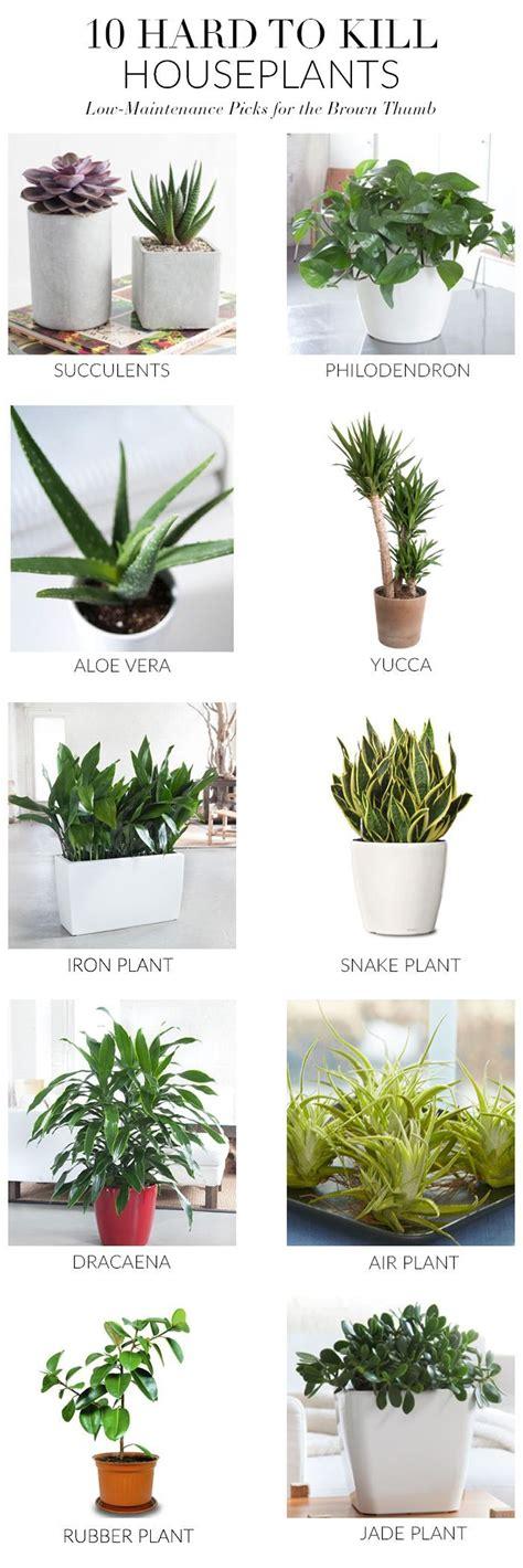 plants that can survive without light best 25 low maintenance plants ideas on pinterest