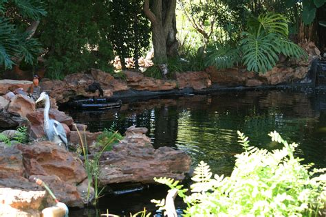 fibre features water gardening south africa  pretoria