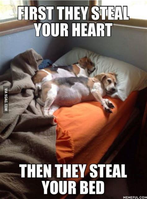 Sharing Bed Meme - dogs first they steal your heart then they steal your