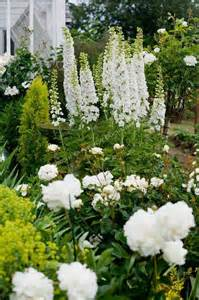 a vignette of white delphinium stalks peonies and roses