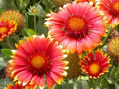 summer flowers the most popular blooms for every month plants that bloom in summer diy