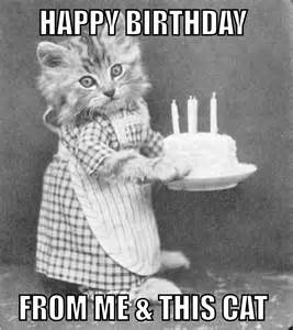 Birthday Ecard Meme - funny cat birthday card image compartirvideos